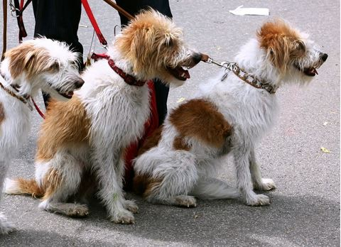 Dogs On Leashes