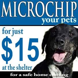Microchip your pet for 15 dollars